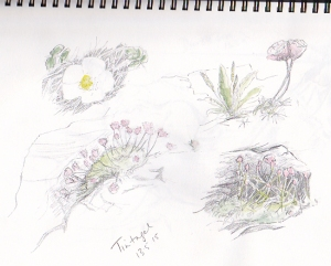 Tintagel sketch_0001